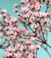 Pink Blossom by eyedesign