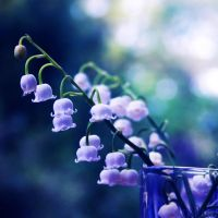 Lily of the Valley by incolor16