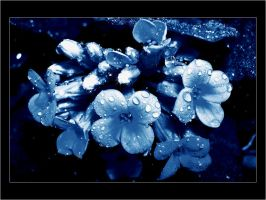 Shining Beauty - Wp by donia