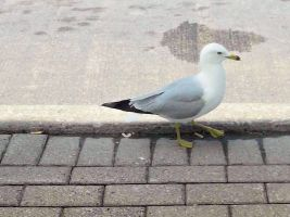 A Seagull by TheWizardofOzzy