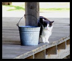 Bollinger Mill 11 Cat by PridesCrossing