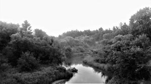 BW Streaming Forest by CasualEclectica