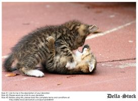 Playing Kittens.3 by Della-Stock