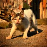 Cats of Ege by cemito