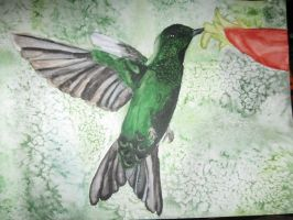 huming bird in water color by xxDemonfangxx