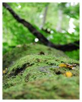 Moss Covered Log by cb-smizzle