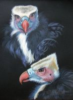 White Headed Vultures by HouseofChabrier