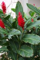 Red Tropical Flower by GreenEyezz-stock