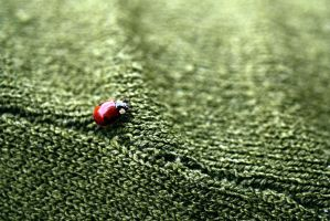 Ladybug on green by mister-softy