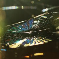Psychedelic spider I by Mechamouche