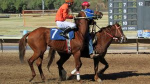 Racehorse Stock 40 by Rejects-Stock