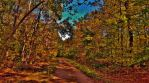 Patuxent Autumn Forests by Matthew-Beziat