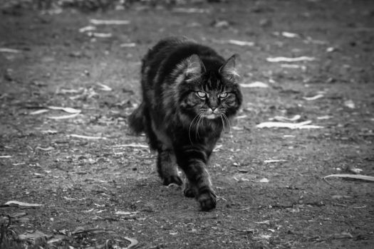Steppin' Out by bast4cats