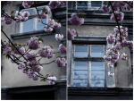 Haunted houses and cherry trees... by BoiledFrog