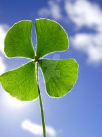 Four-leaf Clover by isabelle-teixeira