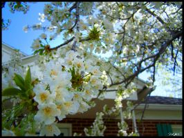 Blooms in the Spring by AzraelleWormser
