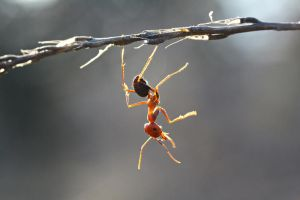 lovely ant by lisans