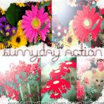 SunnyDay Action. by PartyWithTheStars