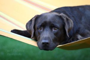 Noa in her hammock by PixelBalance