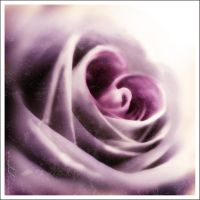 Heart of Rose by Toefje-Kunst