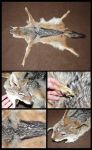 Black-Backed Jackal Pelt by CabinetCuriosities