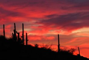 Cactus Sky by wonenownlee