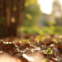 First leafs by EliseEnchanted