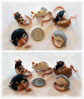 6 Tiny Rats ~ Crazy4ratties Commission by nEVEr-mor