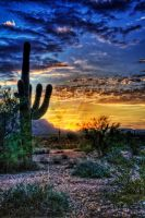Sonoran Sunrise by CeeThruMyEyes