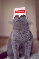 Super Cat! by AngieRedondo