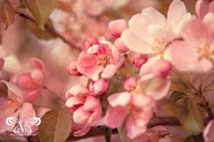 Blossom. by triciavictoria