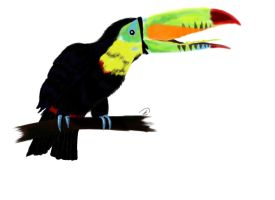 Toucan by SS-Snowy