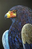 Bateleur Eagle by HouseofChabrier