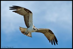 Ospery 4 by AirshowDave