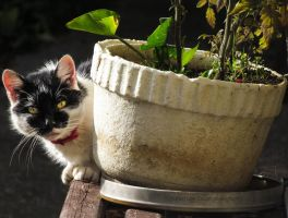 Cili by Misfits13th