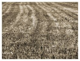 Fields Not Full Of Barley by ThePpeGFX