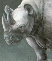 Rhino portrait by DragonosX