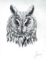 Long-eared Owl sketch by swimdude002