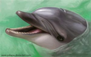 Dolphin: Tursiops truncatus by YuliaPW