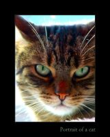 Portrait of a cat by PhilipCapet