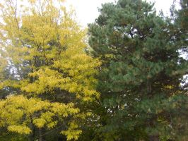 Canadian Fall Colours 7 by Aswang301