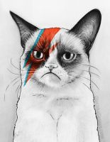 Grumpy Cat as David Bowie by Olechka01