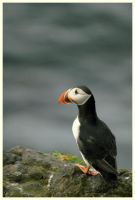 Huffin N' Puffin by globalsinner