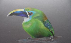 Emerald toucanet by FeatheredDiva
