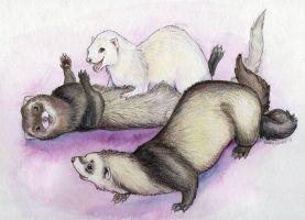 Ferrets Playing by Stormslegacy