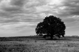 Lonely Oak by IronCrusader