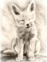 Kit Fox Pup by Astaldo-Fea