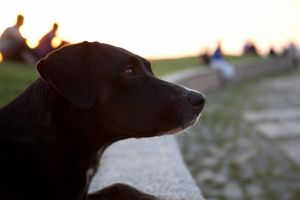 Danny The Dog by sareen