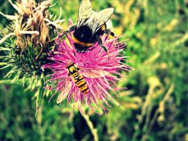 The Bee and the Hoverfly by Lightningbutterflies