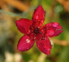 bloody wet red by marob0501